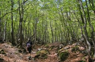 03 Bosque en la subida al collado entre Cubada Grande y  Castro Valnera
