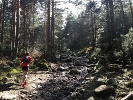 El recorrido transcurre durante mucho tiempo entre los pinos, acompañados de los arroyos de montaña.