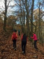 En el otoño los bosques muestran todos sus encantos.