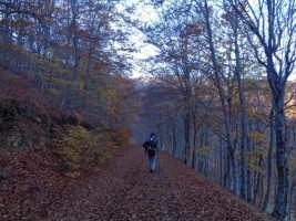 073 Camino de Torales Valdehaya 01-11-15