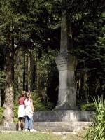 Foto 2 - Monumento forestal