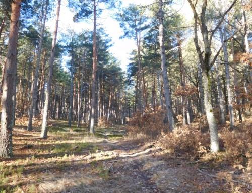 Homologados cuatro nuevos senderos en la provincia de Palencia
