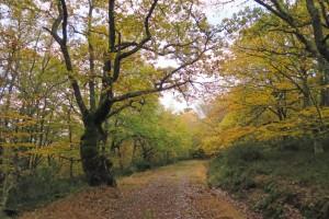GR1 atravesando el bosque de Ujapero